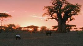 Kameramann gegen Nashorn