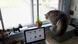 Katze, Fenster, erschrecken