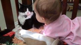Katze, Baby, Haare lecken
