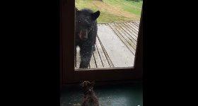 Katze Bär Haustür