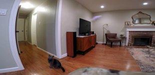 Katze Drohne Wohnung