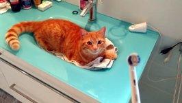Katze liebt elektrische Zahnbürste