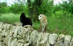 Katze und Eule