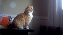 Katze, Sprung, Fail