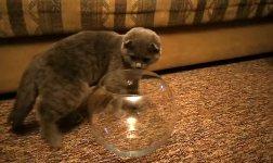 Katze Goldfischglas