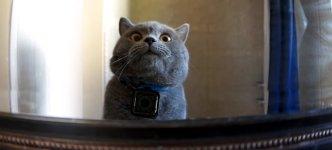 Katze GoPro