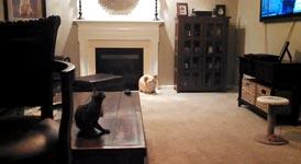 Katze, Angriff