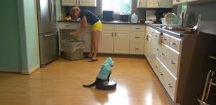 Katze, Hainkostüm, Staubsauger, Küche