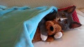 katze knuddelt mit teddy