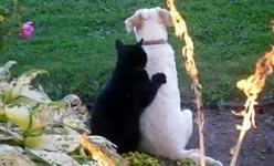 katze, massage, hund