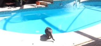 Katze Pool nießen