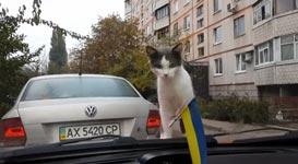 Katze Scheibenwischer