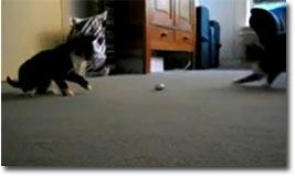 Katze osterei cat eg