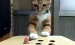 Katze spielt Whac-A-Mole