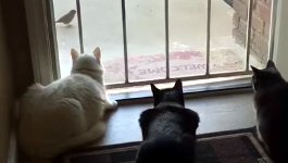 Katzen Vogel Hund erschrecken