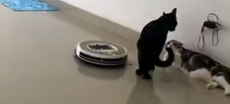Katzen Roomba
