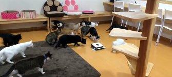 Katzen Wischroboter