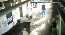 Kegel, Pferdekuss