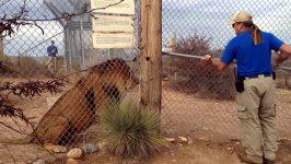 keine Angst zeigen löwen
