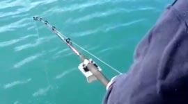 Killerwal, Orca, Angeln, Fischen