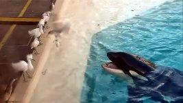 Killerwal Orca Möve Fisch