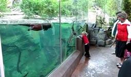 kind, otter, spielen, aquarium