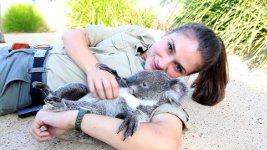 Koala kuscheln
