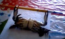 Krabben Workout Bankdrücken