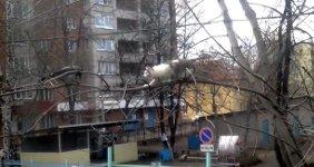 Krähe Rabe katze im Baum
