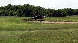 Krokodil Golfplatz Florida