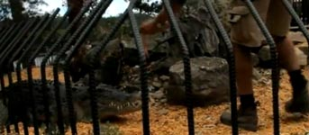 Krokodil schnappt zu