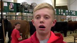 Kühe quetschen dummen Jungen