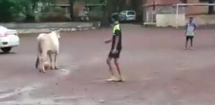Kuh Fussball Indien