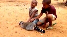 Lemur Streichelanweisungen