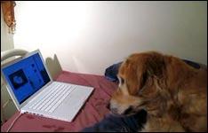 hunde, katzen, tierversicherung, haustiere
