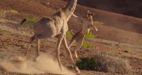 Löwe vs Giraffe