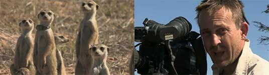 Erdmännchen, BBC, Tierfilmer