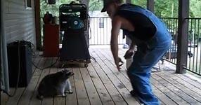 Mann, Waschbär, tanzen