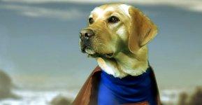 Blindenhunden helfen