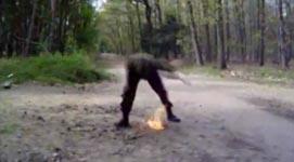 Molotov Cocktail, Explosion, Benzin, Feuer