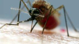 Mücken stechen