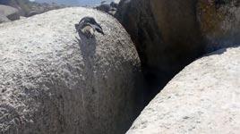 mutiger pinguin