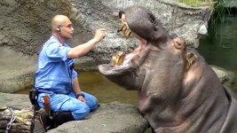 Nilpferd Zähne putzen