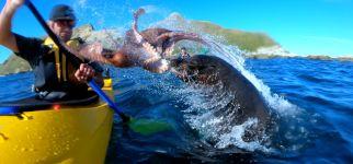 Seehund Seal Oktopus GoPro