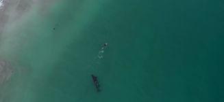Schwimmen mit Orcas