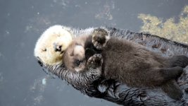 Otter Baby schläft