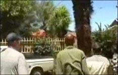 baum fällen, palme fällen, holz, motorsäge, baumarkt