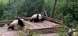 Panda mein Baum