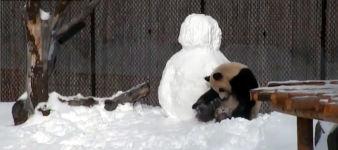 Panda Schneemann