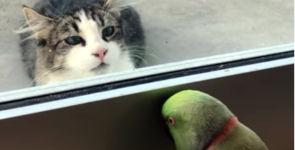 Papagei spielt Peek-a-Boo mit Nachbars Katze